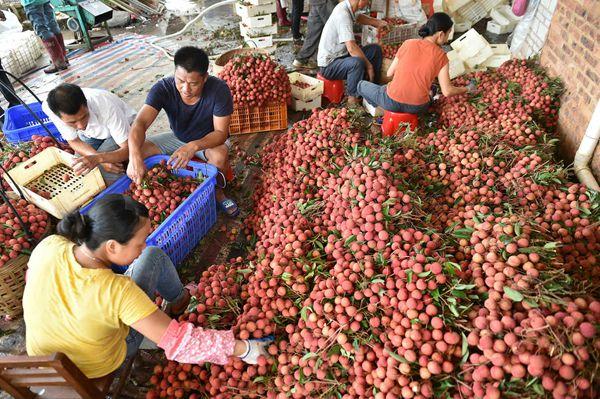 将农产品价值开发到极致 农户企业共赢